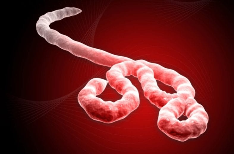 What is Ebola - Most Google Searched Questions