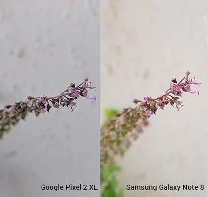 pixel-2-xl-vs-galaxy-note-8-2-camera-comparision (1)