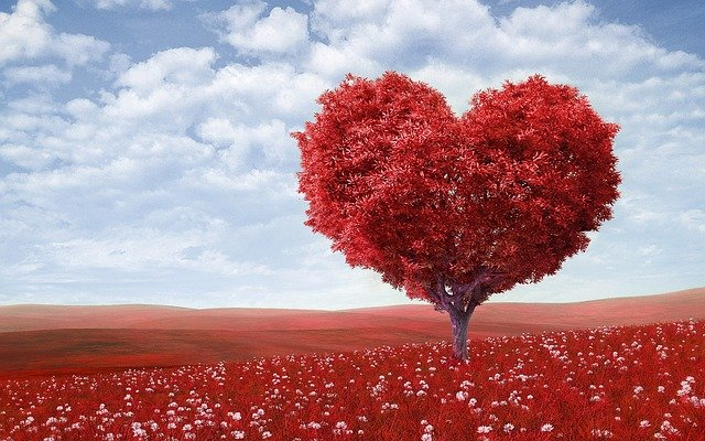 heart-shape, tree, red