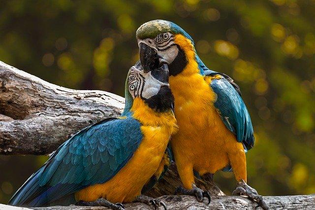 parrots, exotic, ara