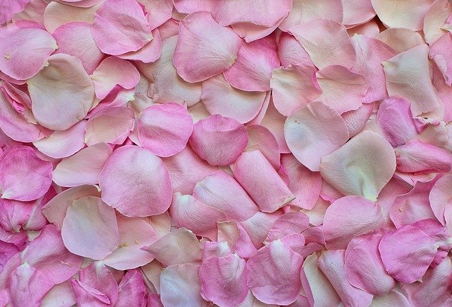 rose petals, pink, background, happy valetines day image