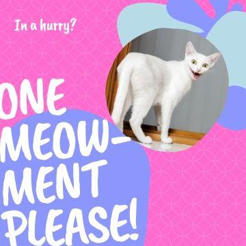 Funny Profile Picture - Meowment