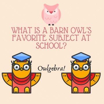Funny Profile Picture - Owlgebra